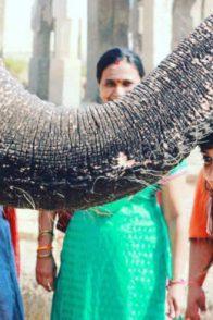 Namma Pranathi Loves Animals More Than Anything Else