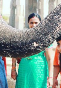Namma Pranathi Loves Animals More Than Anything Else