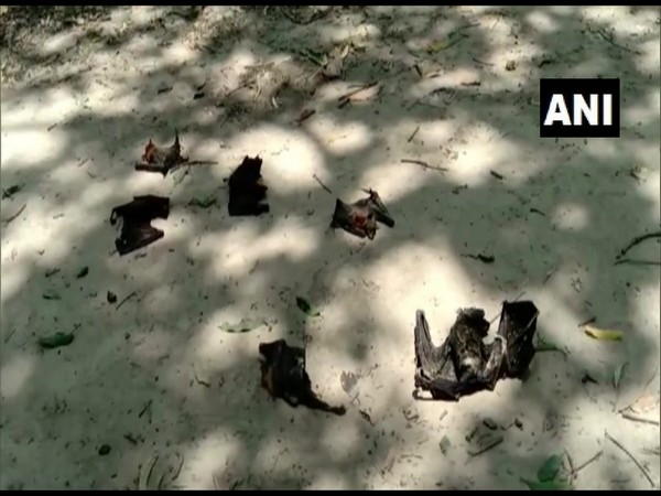 COVID-19: Bat Carcasses Sent To Bareilly For Testing To Discover The Reason Behind Sudden Death