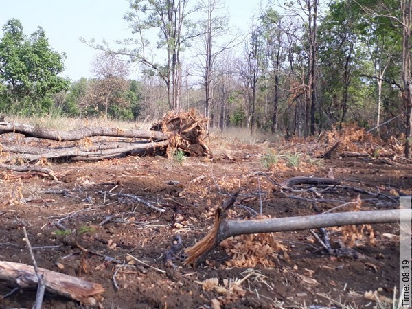 Trees Uprooted Illegally From A Zone Of Tiger Reserve In Maharashtra