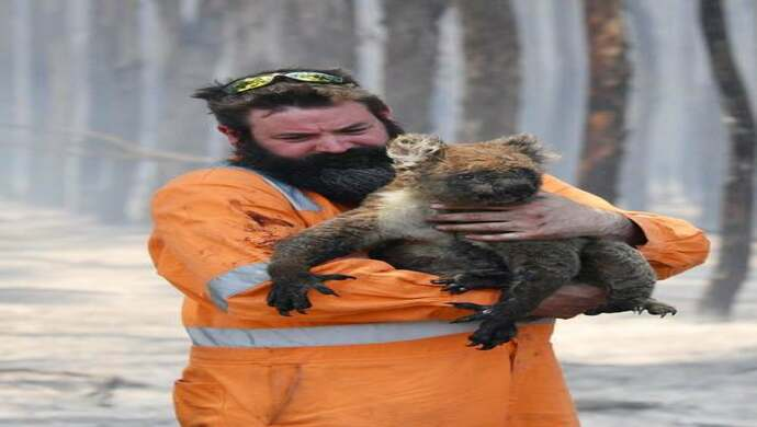 Animals Rescued From Widespread Bushfires Raging Through Forests Of Australia