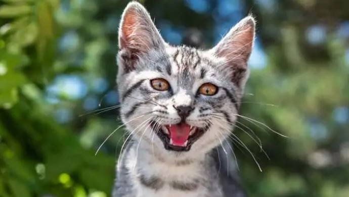 Colombian Farmer Adopts Kitten, Turns Out To Be Wild Cat