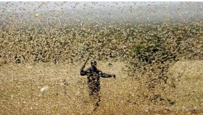 Locust Swarms Ravage Crops In Kenya Again As Country Stares At A Food Crisis