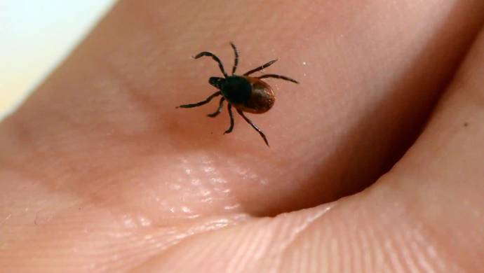 Tick-based Virus In China Kills Seven, Infects 60: Report