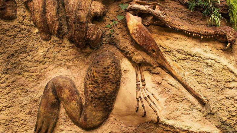 Forget 'Cloned' Dinosaur in China, Find Real Dinosaur Fossils At These 5 Places Around The World - Zee Kannada
