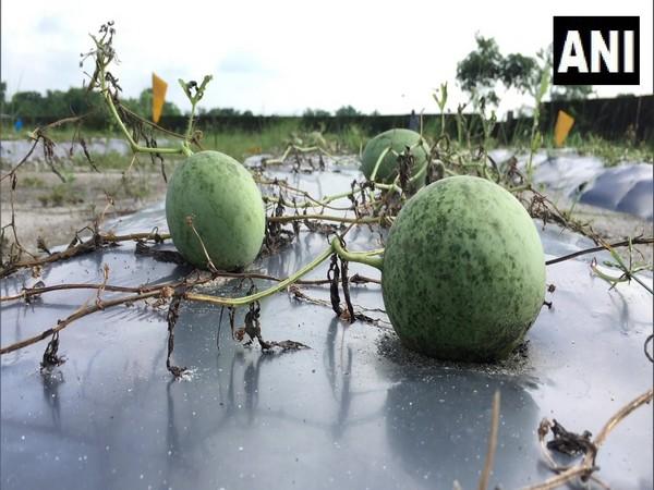 West Bengal: Entrepreneur creates job opportunity in organic farming for returning migrants