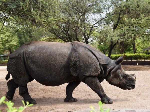 Hyderabad's Nehru Zoological Park to conduct quiz competitions on International Rhinoceros Day