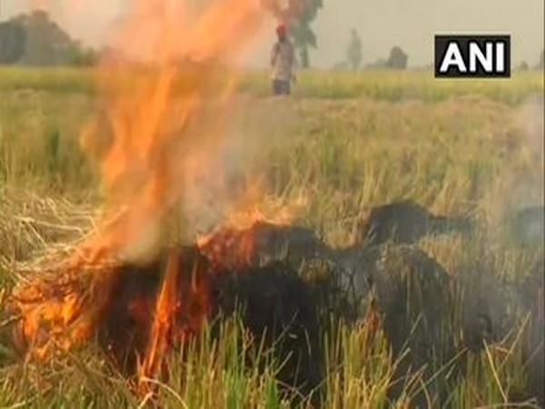 Farmers continue to burn stubble in Punjab's Amritsar