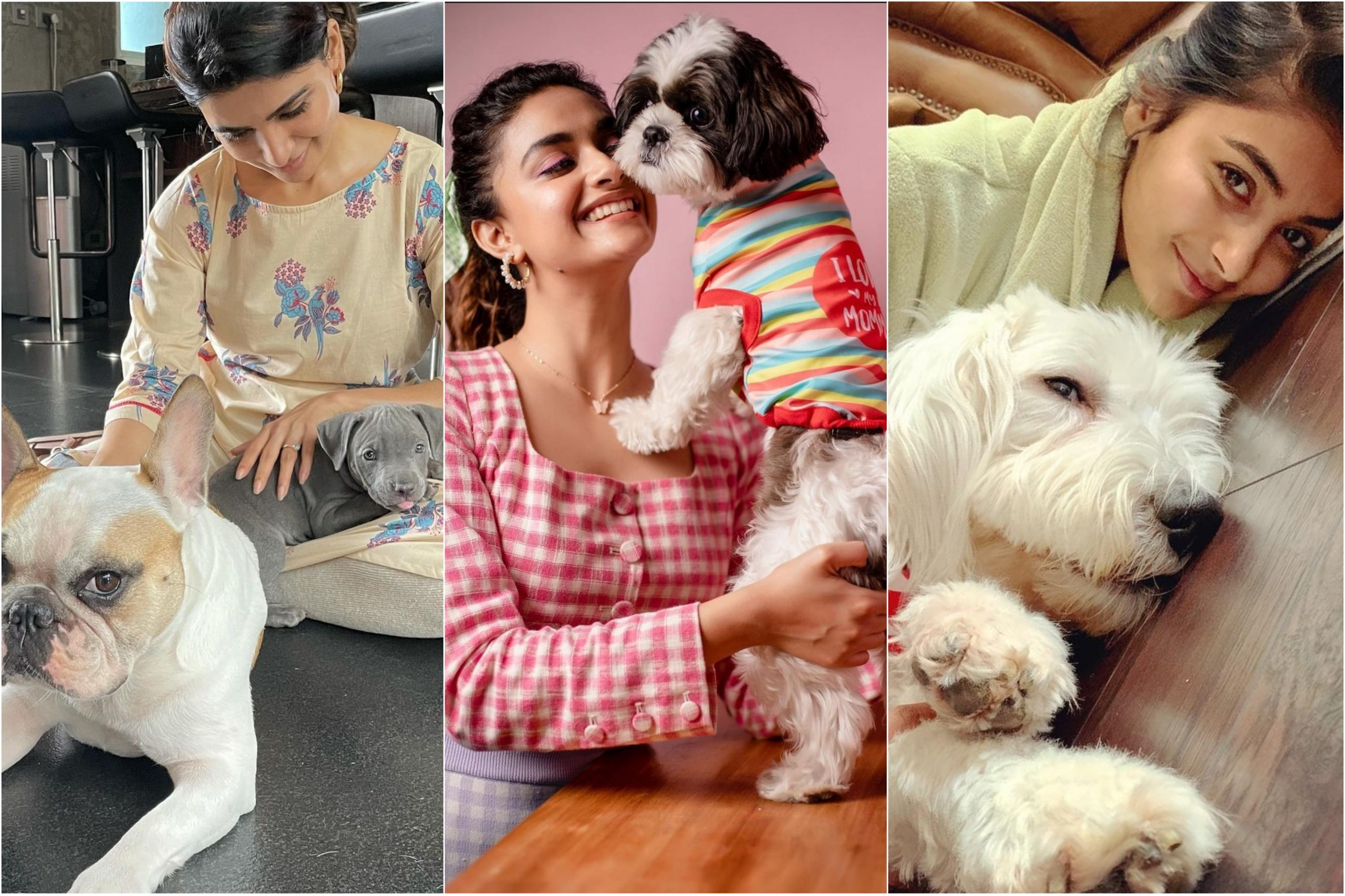 From Mahesh Babu to Samantha Ruth Prabhu, actors who are proud pet parents