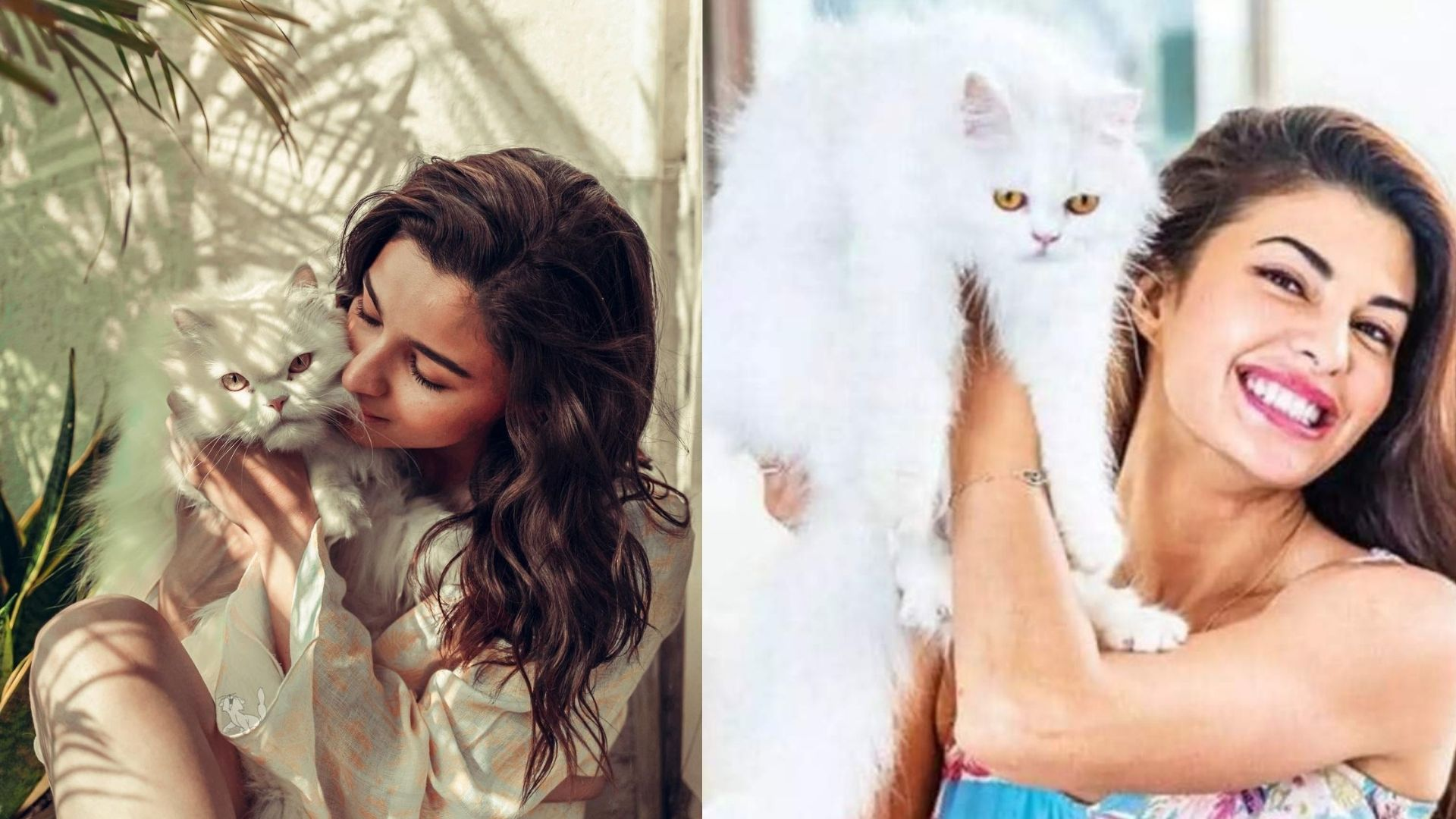 Alia Bhatt To Jacqueline Fernandez- Bollywood Actresses Who Are Madly In Love With Their Cats; Here's Proof
